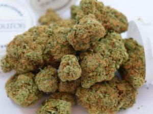 Acapulco Gold Cannabis Strain