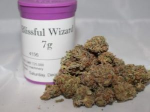 Blissful Wizard Marijuana Strain