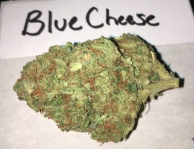 Blue Cheese Cannabis Strain