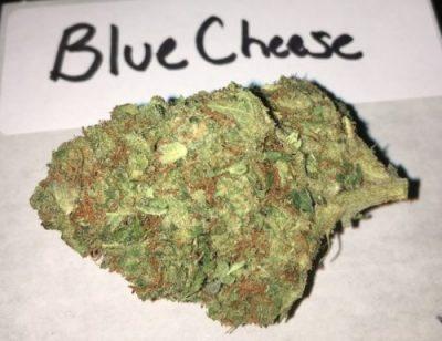 Blue Cheese Cannabis Strain