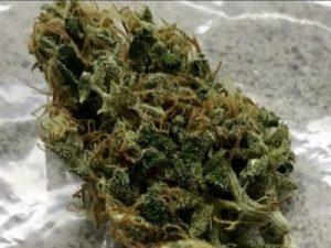 Buy Blue Dream Marijuana Strain