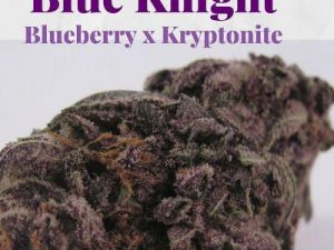 Buy Blue Knight Marijuana