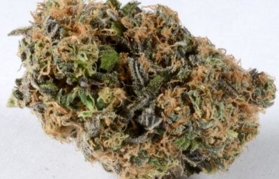 Buy Blueberry Marijuana Strain