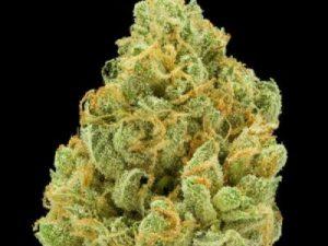 Buy Bruce Banner Marijuana Strain