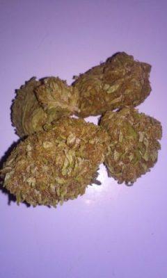 Buy Cinex Cannabis Strain