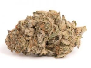 Buy Cookie Dough Marijuana Strain