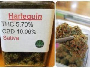 Buy Harlequin Marijuana Strain