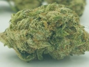 Buy Jet Fuel Marijuana Strain