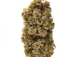 Buy Star Tonic Cannabis Strain