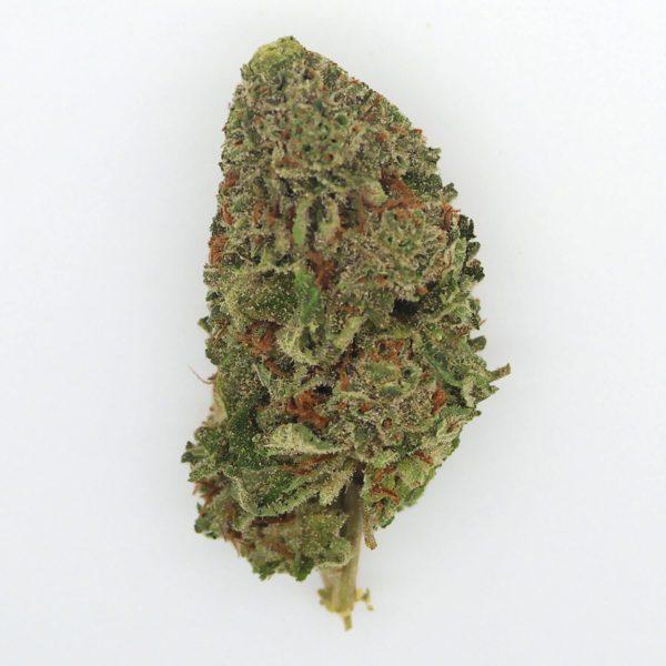 Buy Tangie Cannabis Strain