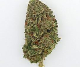 Buy Tangie Cannabis Strain