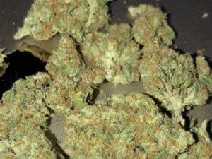 Buy Trainwreck Marijuana Strain