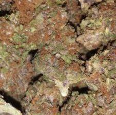 Buy Yeager Marijuana Strain