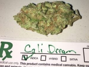 Cali Dream Cannabis Strain