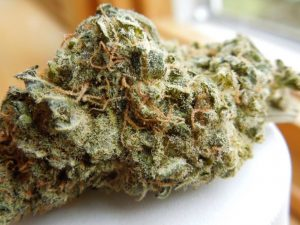 Cinderella 99 Marijuana Strains