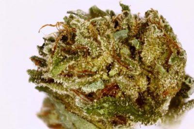 Hindu Kush Indica Marijuana