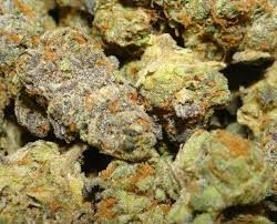 Samoa Marijuana Strain