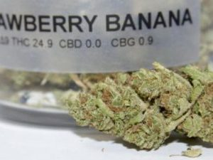 Strawberry Banana Cannabis Strain