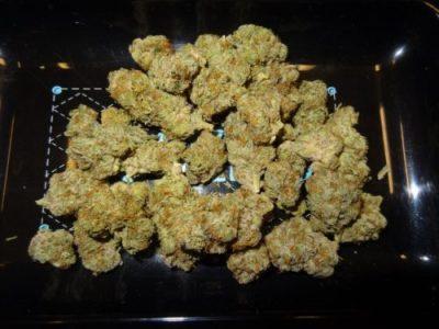 Sunset Sherbet Cannabis Strain