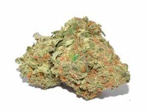 Buy Golden Goat Marijuana Strain
